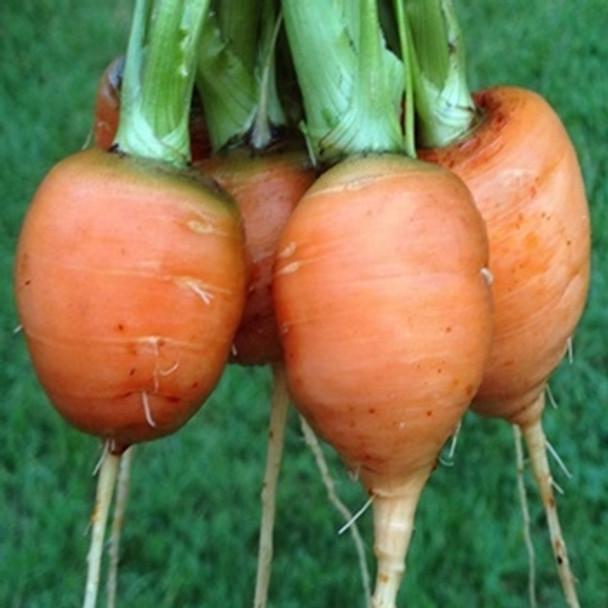 Carrot - Paris Market Atlas - Seed Megastore - Sku 224