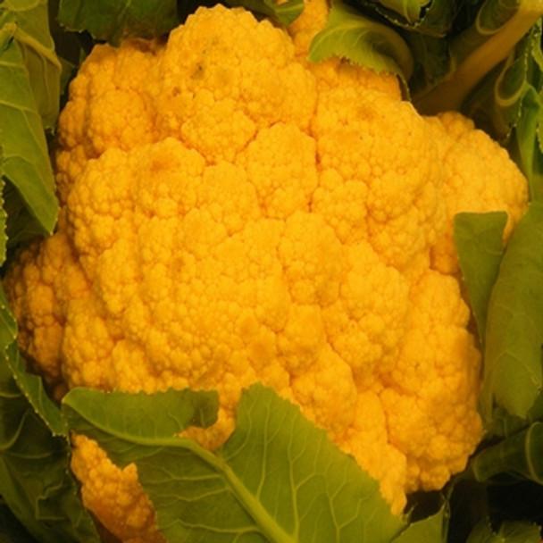 Cauliflower - Sunset - Seed Megastore - Sku 250