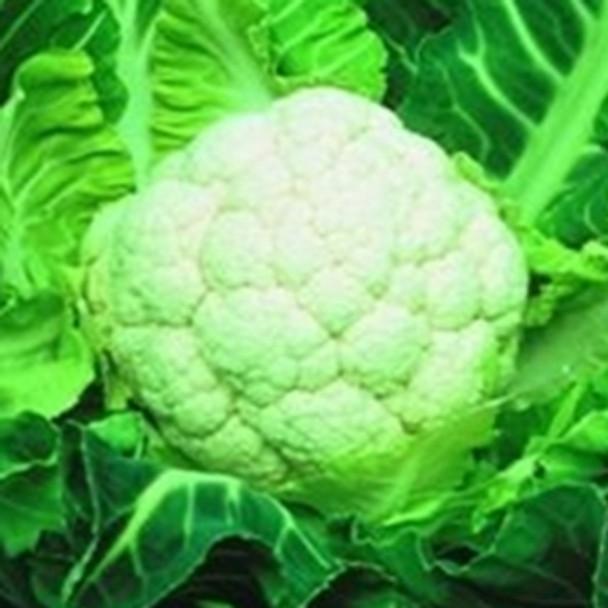 Cauliflower - North Foreland - Seed Megastore - Sku 254