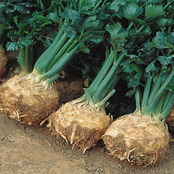 Celeriac - Prinz - Seed Megastore - Sku 266