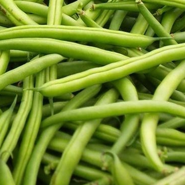 Dwarf French Bean - Stanley - Seed Megastore - sku 336