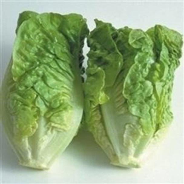 Lettuce - Little Gem - Seed Megastore - sku 504