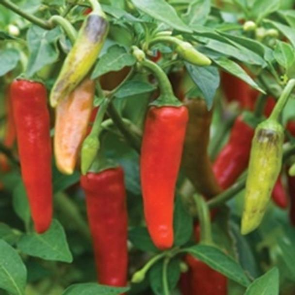 Hot Pepper - F1 Gusto Green - Seed Megastore - sku 723