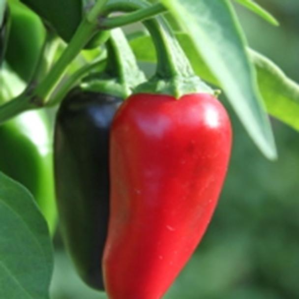 Hot Pepper -Jalapeno - Seed Megastore - sku 725