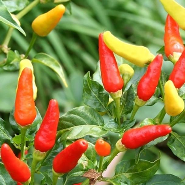Hot Pepper -Tabasco - Seed Megastore - sku 728