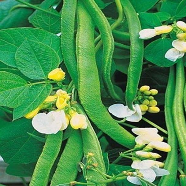 Runner Bean -White Emergo - Seed Megastore - sku 816