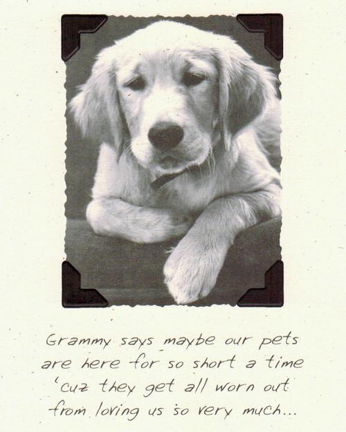 DSM3418 - Pet Sympathy Front