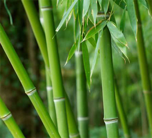 Bamboo is used in bed sheets, but it is not Eco friendly