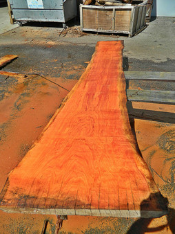 "Monterey Cypress Slab GWS-844 2½"" x 19""-30"" x 121"" - wood slab"