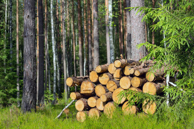 What Does Purchasing Sustainable Wood Mean?