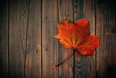 The Unique History of Maple Burl Wood
