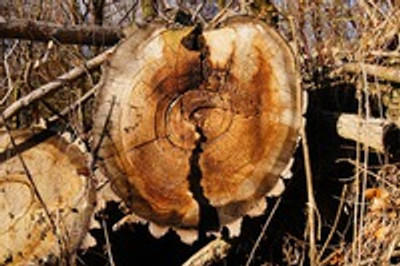 How you contribute to our planet when you verify the sustainability of the wood you buy