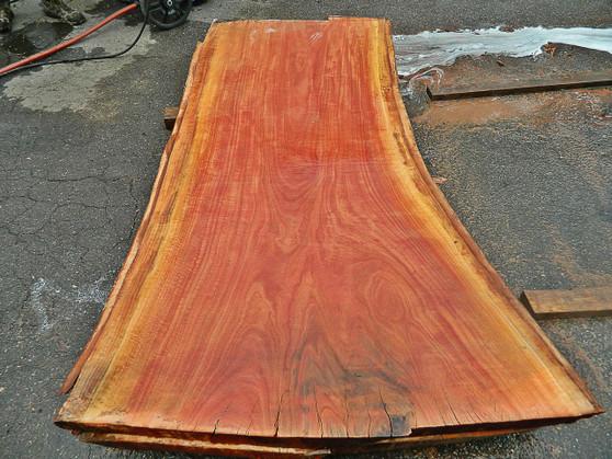 """Red Eucalyptus Slab GWS-811 3¼""""x32""""-41""""x83"""" - wood slab"""