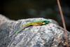"BioBait DNA - 3.75"" Swim Bait - Sunfish  - 6 per pack"