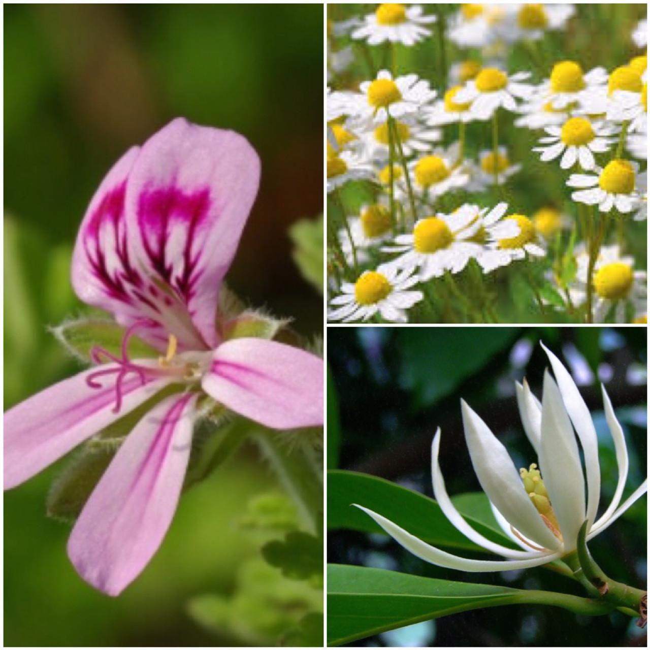 Blossom | BODY BUTTER (2oz)