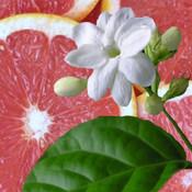 Sambac Fruit Jasmine Pink Grapefruit  BODY & HAIR BUTTER 2 oz