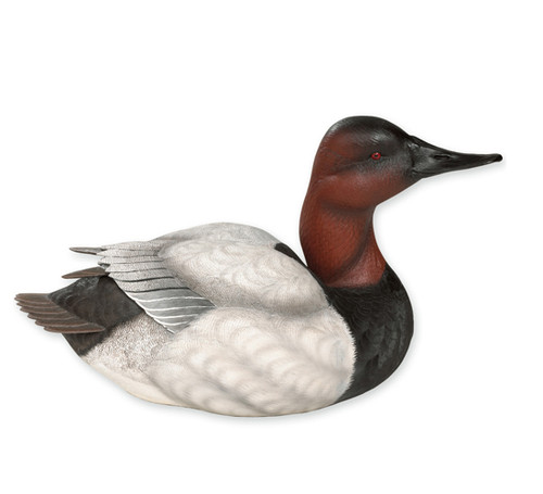 Canvasback Waterfowl Sculpture - Life Size