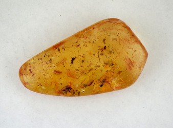 Amber gemstone contains a bee, several fruit flies, ants, and beautiful leaf segments.