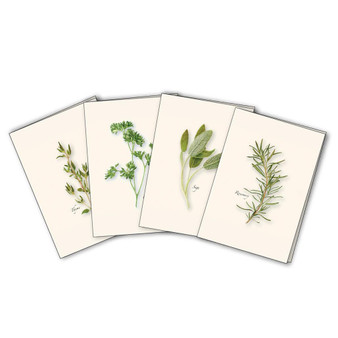 Herbs Boxed Notes