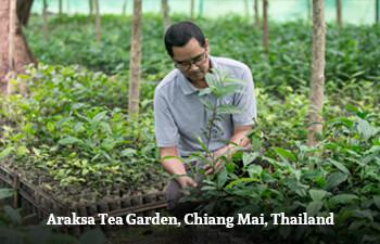 Araksa Tea Garden