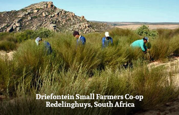 driefontein-small-farmers-co-op-redelinghuys-south-africa-2.jpg