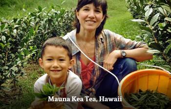 mauna-kea-tea-hawaii.jpg