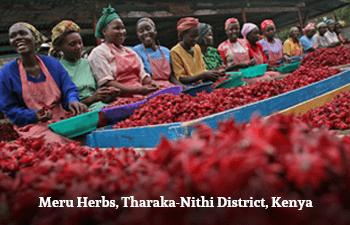 Organic Kenyan Hibiscus