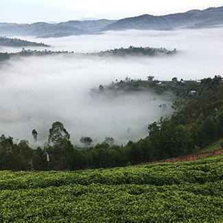 Sorwathe Misty Hills