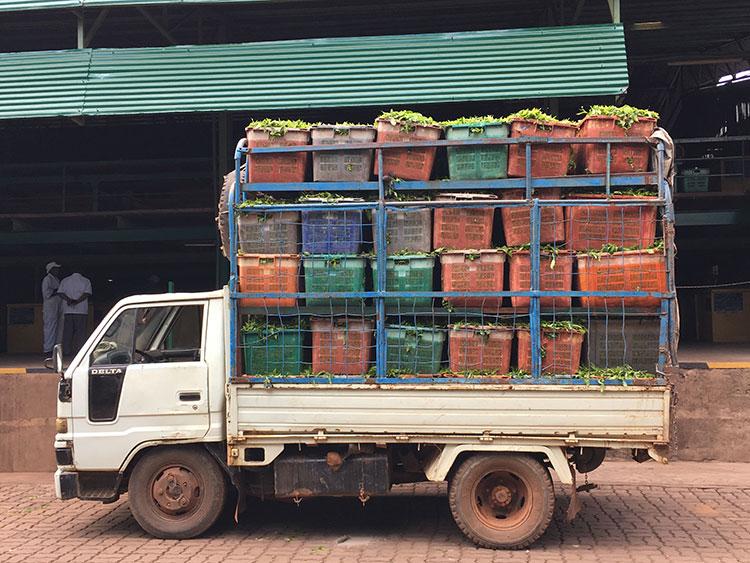 Trucks Delivering Tea