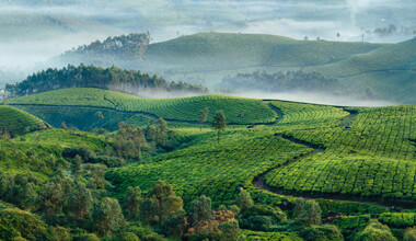 tea-origins-1.jpg