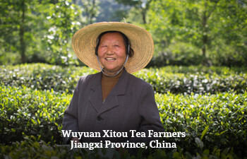 Organic Tea from Jiangxi Province, China