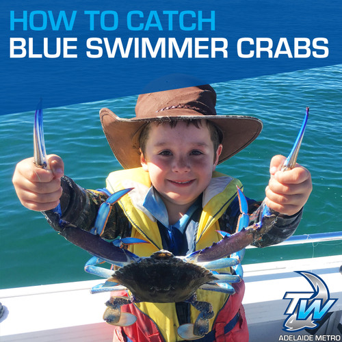 How To Catch Blue Swimmer Crabs