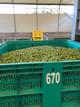 EXTRA LARGE BOTTLE 750ML EXTRA VIRGIN OLIVE OIL FRESCOLIO