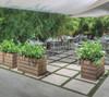 Ellis Planters with live plants