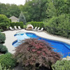 Emerald Green Arborvitae Hedge and Japanese Maple by the Pool