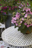 Endless Summer Twist-n-Shout Hydrangea in Planter on Patio Table