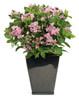 Let's Dance Starlight Hydrangea in Modern Garden Planter