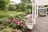 Large Let's Dance Starlight Hydrangea Flowers in Flower Garden