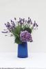 Cut Cityline Mars Hydrangea Flower in Vase