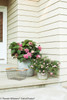 Cityline Vienna Hydrangea in Planters on Porch