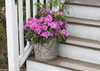 Bloom-A-Thon Lavender Azalea in Planter on Stairs