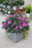 Bloom-A-Thon Lavender Azalea in Square Garden Planter