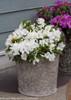 Bloom-A-Thon White Azalea Bush in Pot