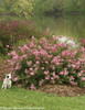 Scent And Sensibility Pink Lilac With Dog