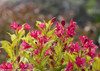 Ghost Weigela Branches Stems Leaves Flowers