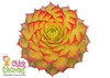 Chick Charms Gold Nugget Sempervivum Leaves