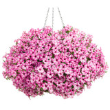 Supertunia Mini Vista Pink Star Petunia in Hanging Basket