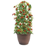 Tangerine Slice A-Peel® Black-Eyed Susan Vine Growing up a trellis in a planter