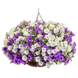 Misty Seas Mixed Annual Combination in Hanging Basket