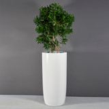 Congress Tall Extra Large Planter with plants